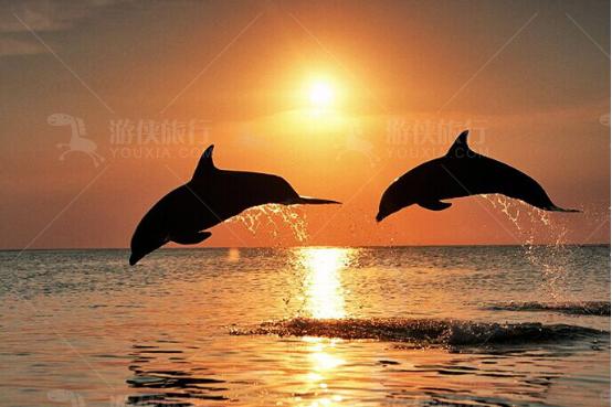 海豚犹如跳跃音符
