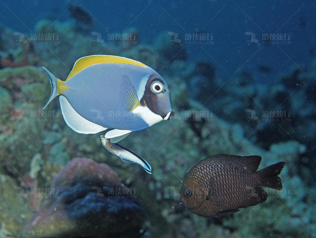世界上最适合潜水的胜地之一