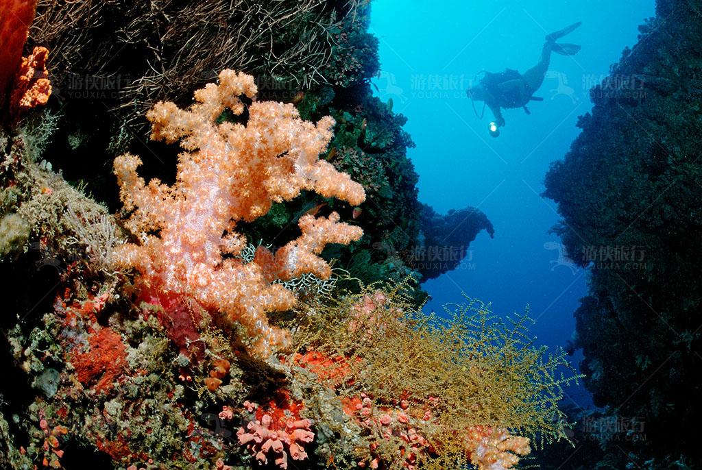 世界上最大的珊瑚群