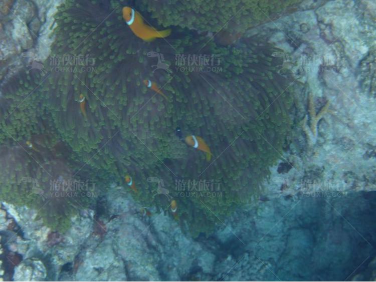 穿梭在珊瑚里的鱼群