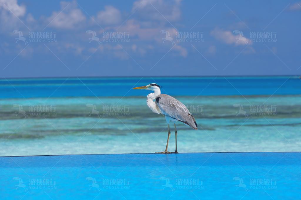 海边那只遗世独立的鸟