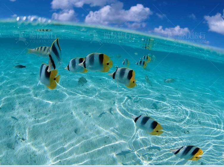 蔚蓝色海面之下的奇妙世界