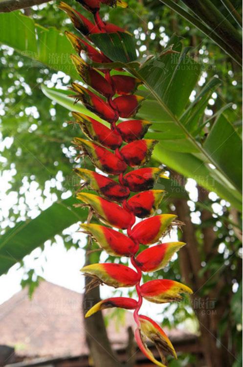 颜色鲜艳的花卉