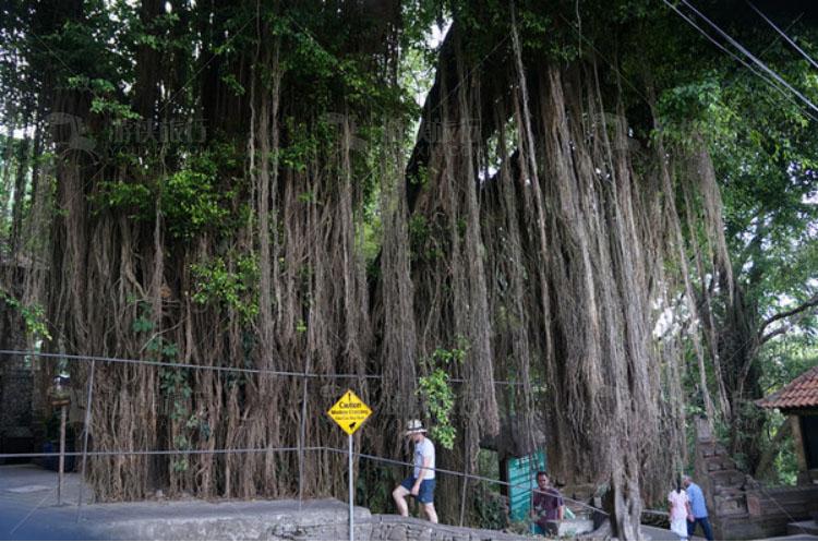 猴林的入口