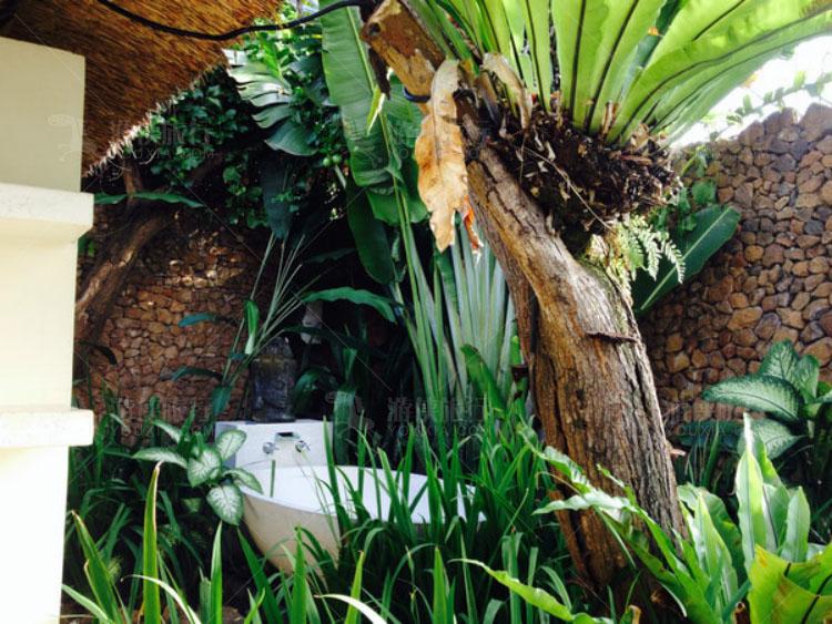 掩映在树林中的浴缸