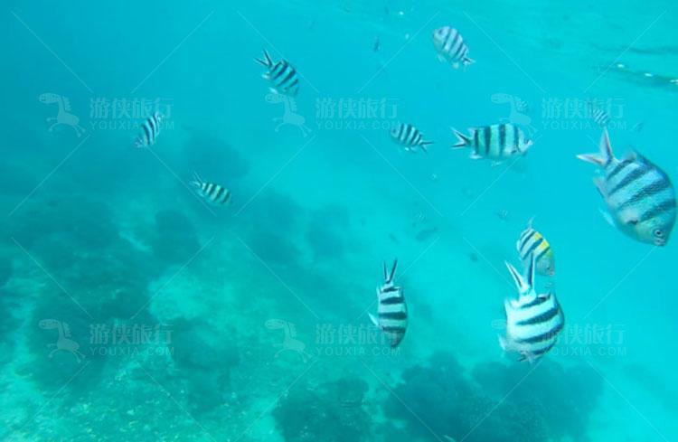 鱼群就从你面前游过