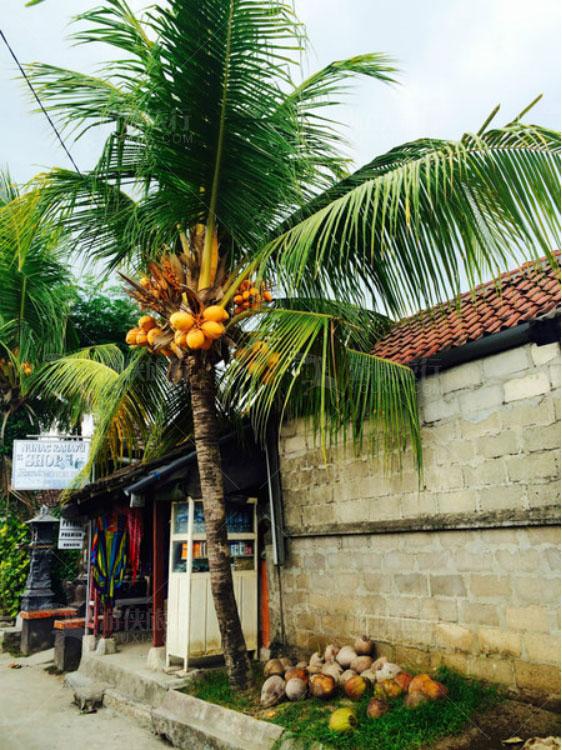 到处都是椰子树