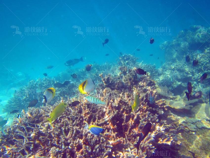 珊瑚花园潜水