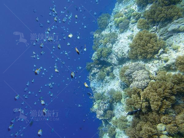 珊瑚和各种海底植物丰富