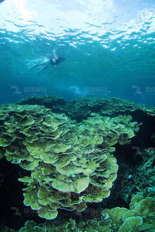"""珊瑚花园 ""(Coral Garden)"
