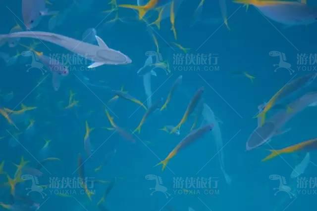 与鲨鱼共舞
