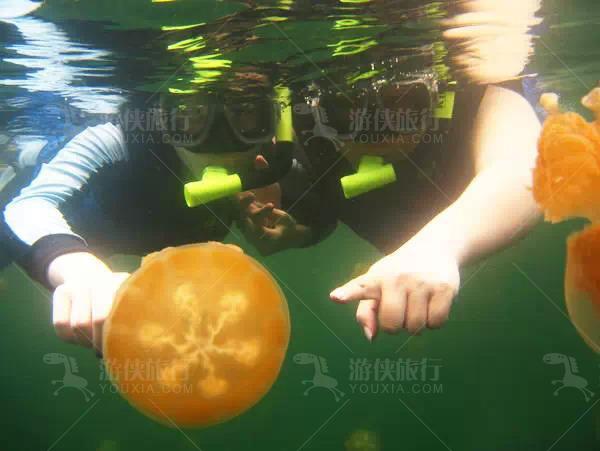 帕劳世界独一无二的黄金水母湖