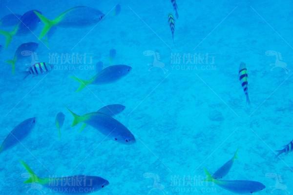 海底系统的各种生物