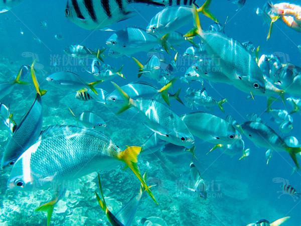 海域最常见的鱼种