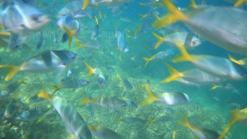 五彩斑斓的海底世界