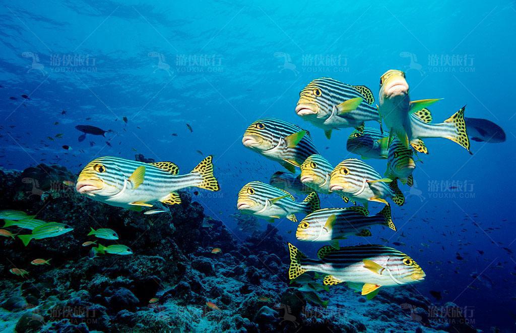马尔代夫的鱼类为什么会那么丰富