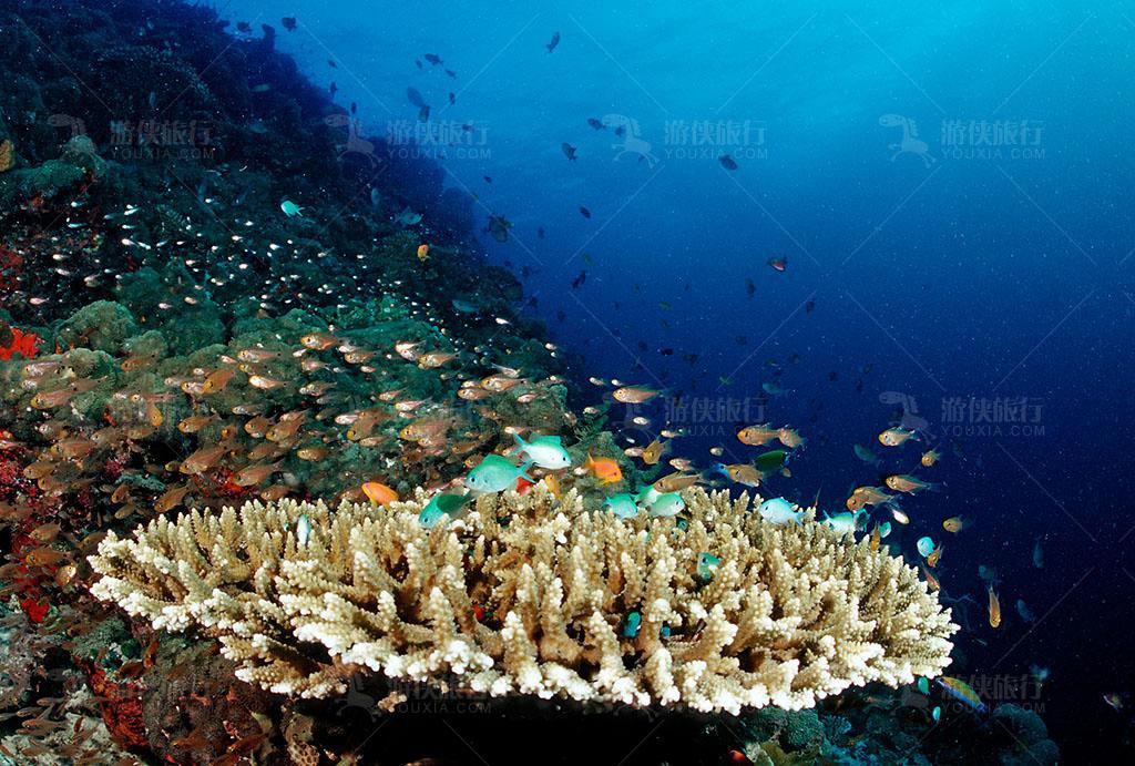 马尔代夫的珊瑚为什么那么多