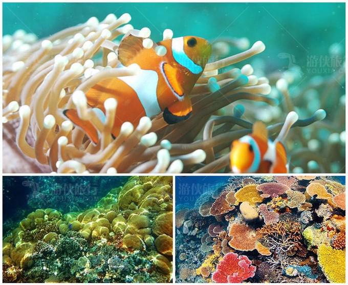 软硬珊瑚区