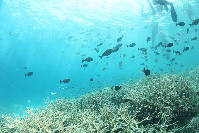 七彩鱼世界