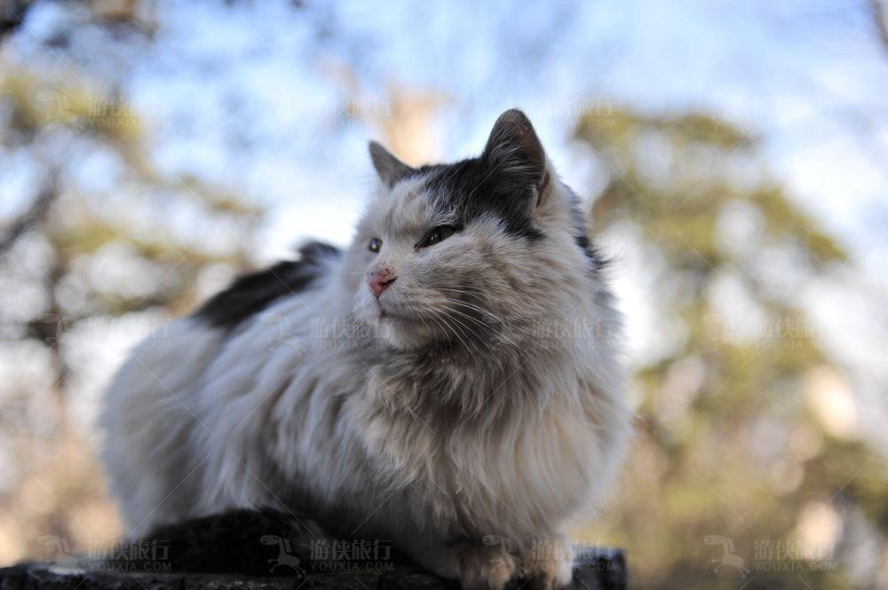 西安法门寺猫