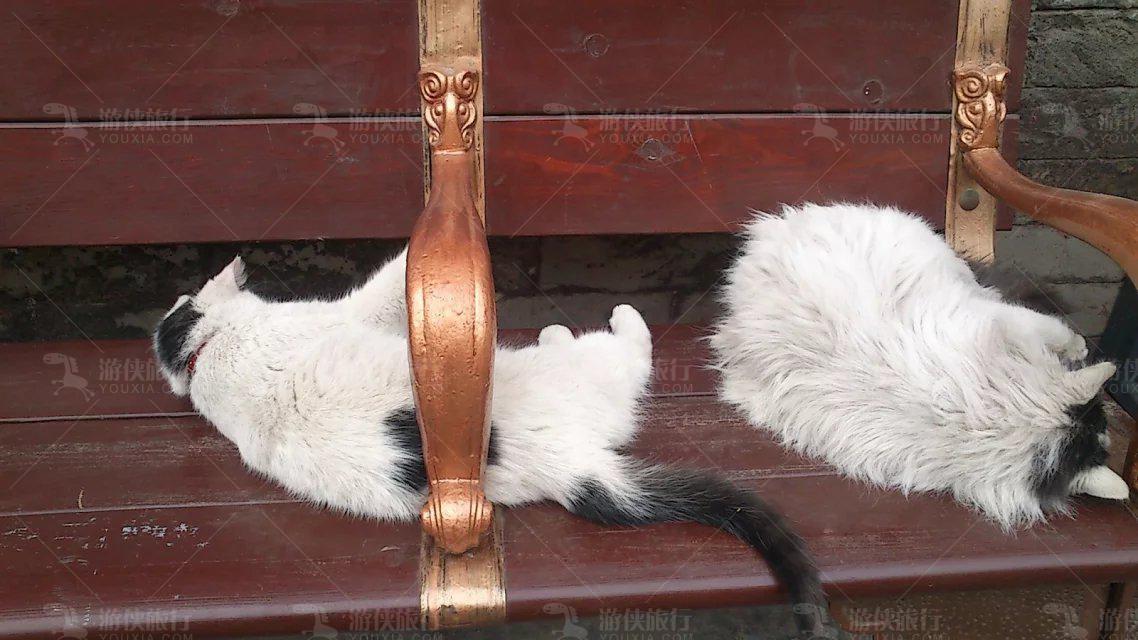 紫禁城猫咪