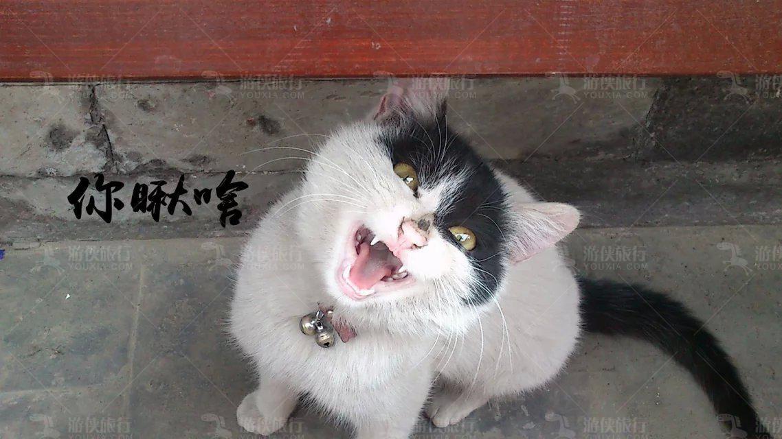 紫禁城大内密探猫