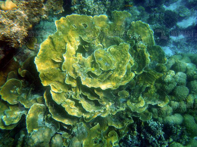 帕劳珊瑚花园