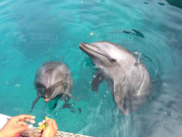 帕劳太平洋海豚湾