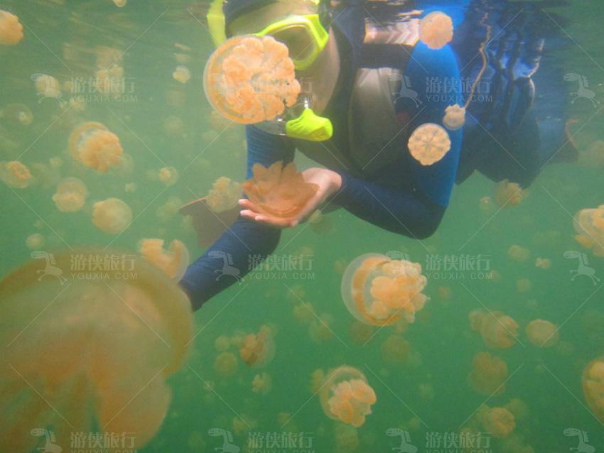 无毒水母湖