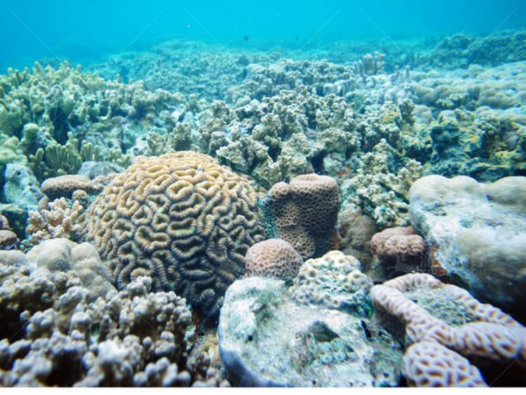 千姿百态的各种珊瑚