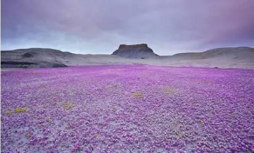 阿塔卡马沙漠