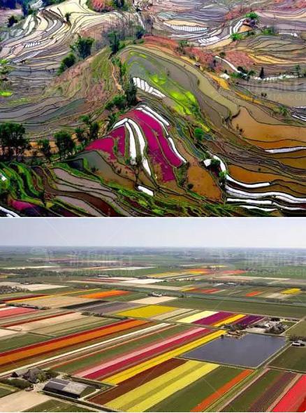 中国元阳梯田和荷兰的郁金香花田