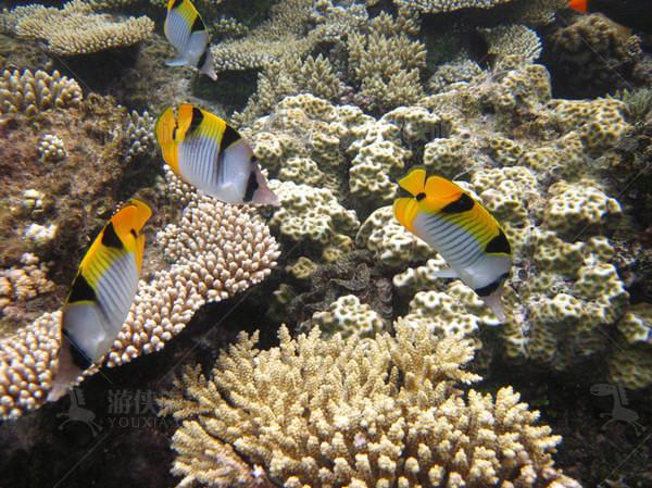 马尔代夫的热带鱼