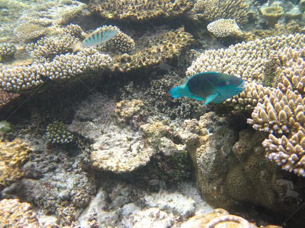 神秘的热带鱼
