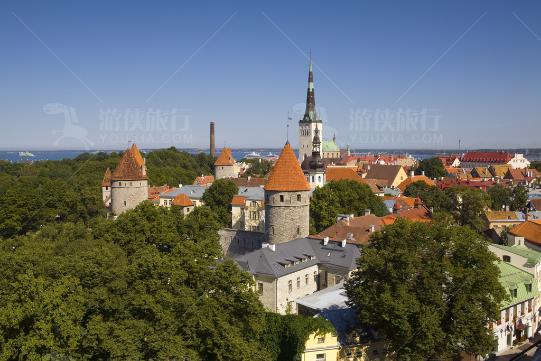 森林城市爱沙尼亚