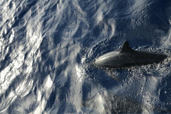 组织客人出海看海豚