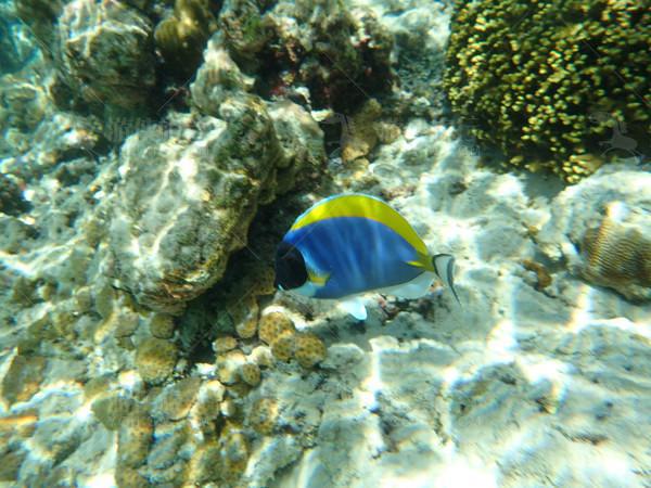 马代色彩鲜艳的热带鱼