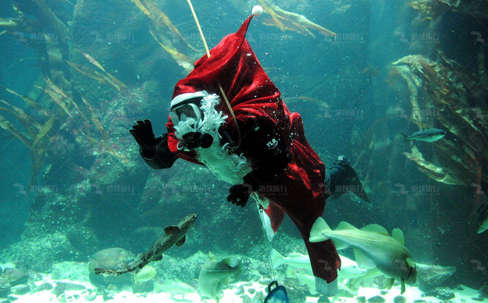 与水下圣诞老人合照