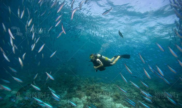 身边有热带鱼游过