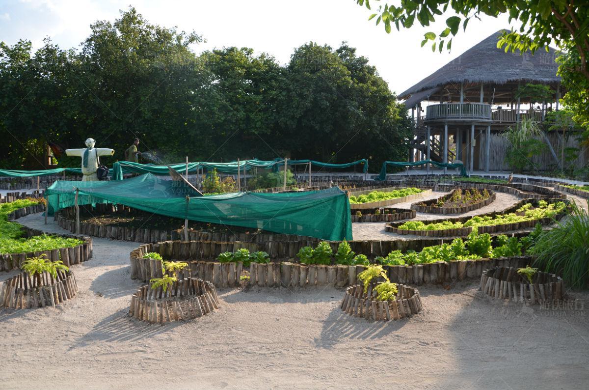 第六感花园有机食材