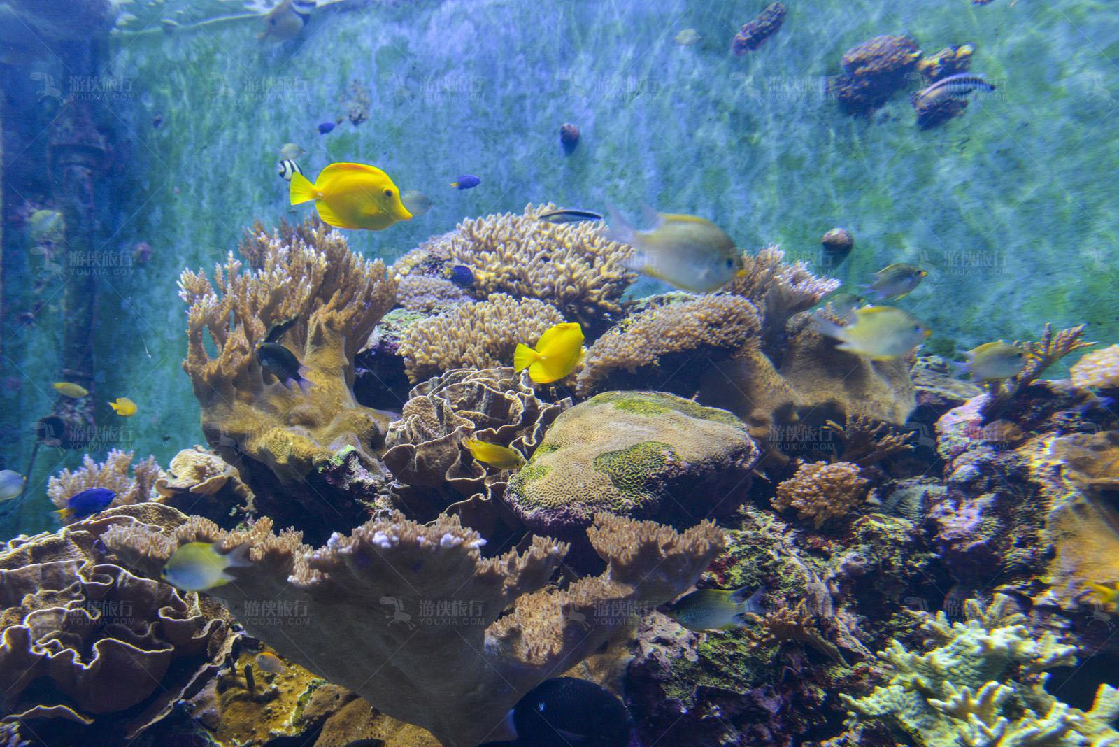 马代浮潜看珊瑚