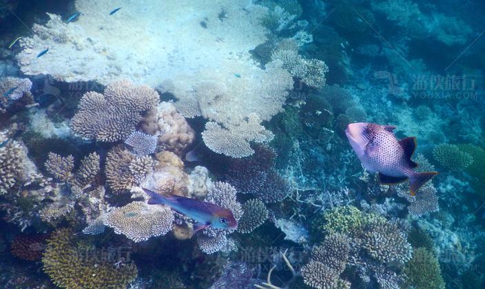 马代鲁彬逊岛潜水