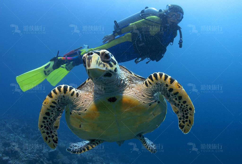 悦椿庄马尔代夫薇拉瓦鲁海龟岛