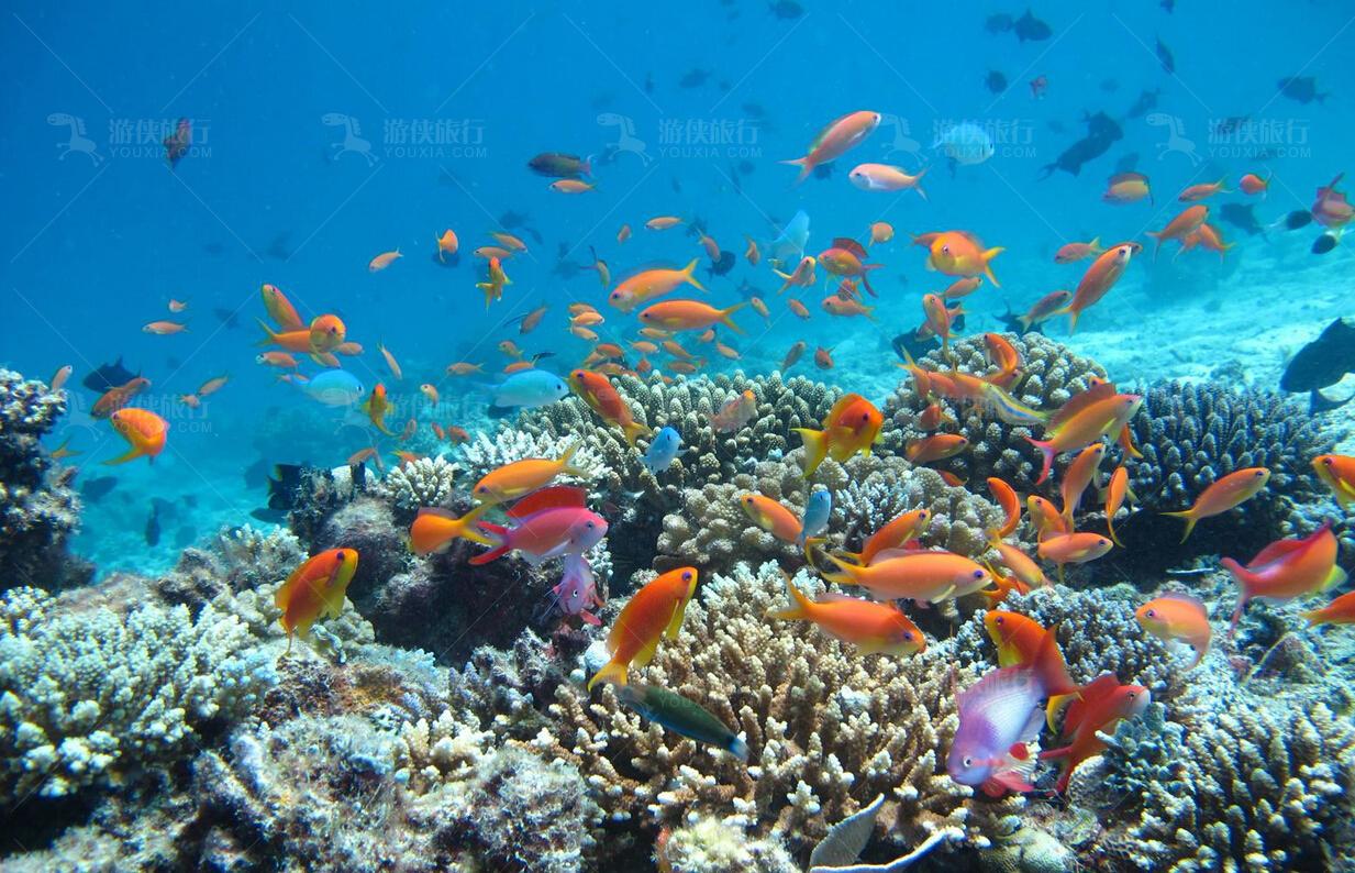 马代热带鱼