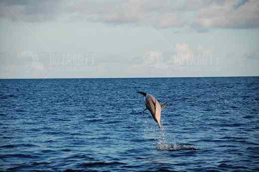 马尔代夫看海豚