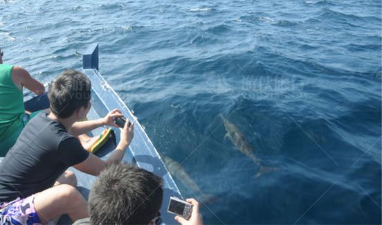 马代出海观海豚