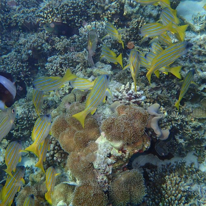 神仙珊瑚岛浮潜