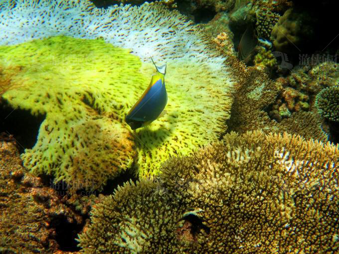 马代阿米拉富士岛