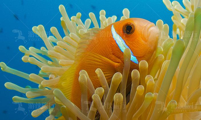 马尔代夫第六感拉姆潜水