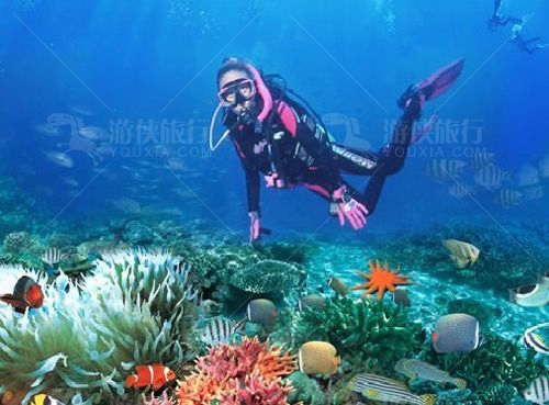 马尔代夫泰姬珍品潜水